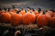 "houseofoctober:  "" Halloween is Coming by JustinDeRosa  """