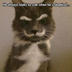A skeptical cat