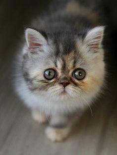 Awwww! Kitten is cute.