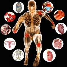Smarteach Provides a comprehensive well presented course on human anatomy that focuses on demystifying the structural complexity of human body in an unp. Undergraduate medical education online in physiolo Human Body Anatomy, Human Anatomy And Physiology, Gross Anatomy, Namaste, Body Fluid, Diabetes Treatment Guidelines, Body Systems, Video Games For Kids, Free Courses