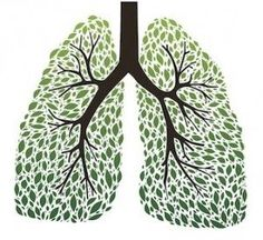 LUNGS: The 9 Best Herbs for Lung Cleansing and Respiratory Support   Wake Up World > There were some here I hadn't heard of being used for lung support. Anything to help my very excited asthma stop twitching.....
