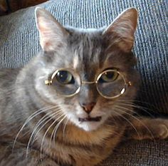 45 Cats Wearing Glasses | Gold Rims Are It