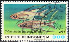 Indonesia.  TROPICAL FISH.  TELMATHERINA LADIGESI.  Scott 1573 A429, Issued 1994  Apr 20, Photo., Perf. 13, 300. /ldb.
