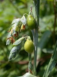 imagenes de plantas medicinales - Buscar con Google