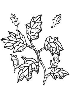 Coloriage de feuilles ayant des vertus médicinales