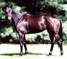 Silverbulletday (1996-) was sired by Silver Deputy out of Rokeby Rose; Grandsire: Deputy Minister; Damsire: Tom Rolfe. Her excellent racing record of 15 wins in 23 starts (15-3-1) led to her being named both the U.S. Champion 2-Year-Old Filly in 1998 and the U.S. Champion 3-Year-Old Filly in 1999. Among her many wins were the Kentucky Oaks, Black-Eyed Susan Stakes, Monmouth Oaks, Gazelle Handicap and the Breeders' Juvenile Fillies Cup. Silverbulletday was inducted into the Hall of Fame in…