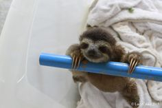 Happy sloths. | The 29 Cutest Sloths That Ever Slothed