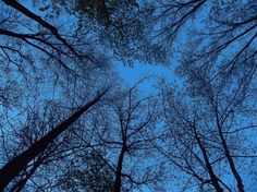 Night Sky at camp