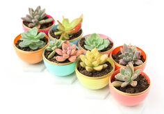 DIY Mini Spring Succulent Planters from Plastic Easter eggs! What a fun craft idea that is perfect for a spring party or bridal shower. Egg Carton Crafts, Egg Crafts, Easter Crafts, Easter Gift, Holiday Crafts, Spring Crafts For Kids, Easy Crafts For Kids, Easy Diy Crafts, Nifty Crafts