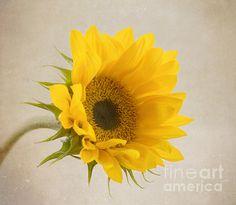 What a beauty!!!!  I See Sunshine by Kim Hojnacki