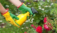 Az ecet igazi csodaszer a kertben, használd te is! Az ecet körülbelül egyidős a civilizációval, a kertben történő használata pedig igazán hasznos...