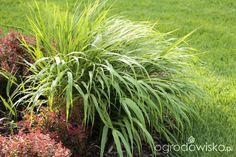 Ogród z lustrem Herbs, Herb, Medicinal Plants