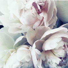 The beauty of Spring, blush pink Peonies #bridalbouquet #peonies #blush #pink #spring #beauty #bridal #flowers #florist #instylebridal #sydney #bayrun
