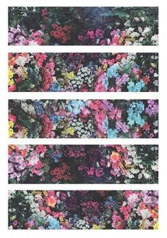 All things lovely & floral Banner, Plants Are Friends, My Flower, Vintage Flowers, Pretty Pictures, Planting Flowers, Beautiful Flowers, Art Photography, Flower Photography
