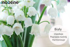 Zastanawiasz się nad zmianą mebli w swojej kuchni?  Co powiesz na biały kolor?  #biel #moda #meble #kuchnia #kolor #NowyTarg Plants, Plant, Planets