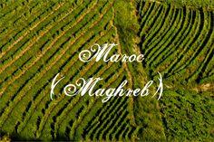 Région viticole du Maroc (Maghreb)  #vin #wine #winelovers #regionsviticoles #regionviticole #viticulture #maroc #apprendrelevin #cultureduvin #vinrouge #terroir