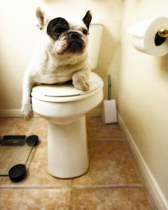 How long is too long for your pet to not poop? Dr. Hogle goes over the ins and outs of when to be worried when it comes to monitoring stools.