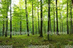 Viridian Forest Wallpaper
