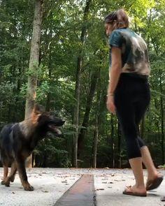 German Shepherd Videos, German Shepherd Training, Cute German Shepherd Puppies, German Dogs, Baby German Shepherds, German Shepherd Breeds, Rottweiler Names, Dog Shedding, Dog Names