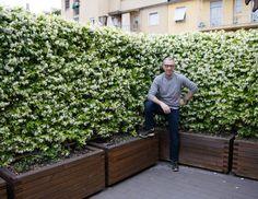 Maliny Picture of Hardhout 155 cm Jardin Vertical Fachada - New ideas Backyard Garden Design, Terrace Garden, Backyard Landscaping, Roof Garden Plants, Camping Am Meer, Garden Privacy, Garden Entrance, Back Gardens, Roof Gardens