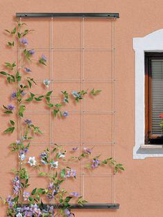 10 Best Wire Trellis Images Garden Fencing Creepers