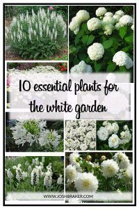 Top 10 Essential Plants For The White Garden. A great handy guide for selecting . Top 10 Essential Plants For The White Garden. A great handy guide for selecting the best white flowering plants for your garden White Gardens, Small Gardens, Outdoor Gardens, Outdoor Plants, Front Gardens, White Flowering Plants, White Plants, White Perennial Flowers, Green Plants
