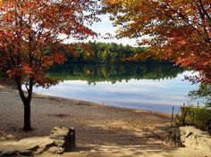 Walden Pond, where Thoreau went to find peace and simplicity.