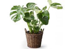 Vad är väl den gröna trenden utan vackra växter? Förgyll hemmet med inslag från naturen - här är de hetaste växterna du kan inreda med just nu.