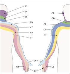 Cervical Nerves More