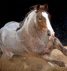 Cutting western quarter horse