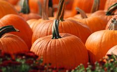 OPTIVISION Omega 3, Pumpkin, Vegetables, Pink Eyes, Order Form, Visual Impairment, Linseed Oil, Natural Remedies, Pumpkins