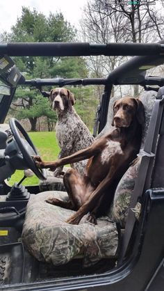 Ready For Hunting - funnydogsite.com #dogs #funny #cute