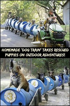 This Man Built a Homemade 'Dog Train' That Takes Rescued Puppies on Outdoor Adventures!