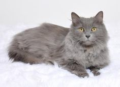 Tinkerbell is a fuzzy love bug who is available for adoption at our Mission campus!