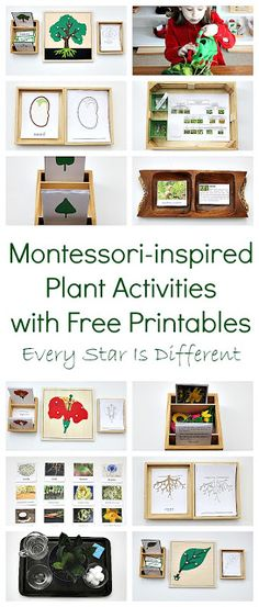 Montessori-inspired plant learning activities with free printables.