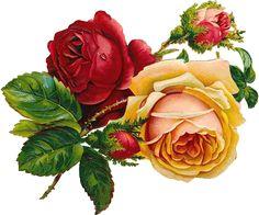 Victorian roses scrap