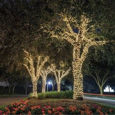 Outdoor Tree Lighting, Outdoor Fairy Lights, Garden Fairy Lights, Lighting Ideas, Backyard Party Lighting, Solar Led String Lights, String Lights Outdoor, Backyard Garden Landscape, Backyard Landscaping