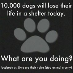 (This is not cute, as my board suggests...just major food for thought.)  Foster, adopt, volunteer ~ help save the shelter dogs