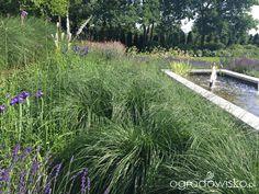 Ogród pod trzema dębami - strona 136 - Forum ogrodnicze - Ogrodowisko
