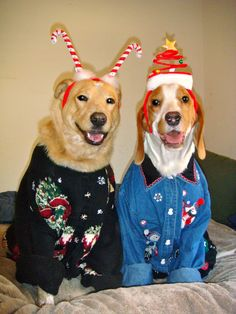 """Did somebody say Ugly Christmas Sweater Party?! We're in! Needing ideas for a FUN Ugly Christmas Sweater Party check out """"The How to Party In An Ugly Christmas Sweater"""" at Amazon.com"""