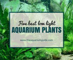 5 Low Light Aquarium Plants