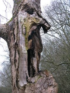 Ent by ewjz31, via Flickr