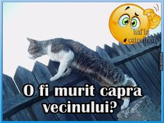 O fi murit capra vecinului? Animals And Pets, Emoji, Comedy, Humor, Wallpaper, Memes, Funny, Quotes, Kittens