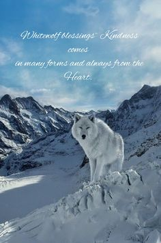 Whitewolf blessings~ Kindness comes  in many forms and always from the Heart.  #wisdom #whitewolfblessings #kindness #heart #inspirationalquotes