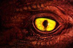 Dragon Eye Blue or Water Dragon Eye. Red or Fire Dragon Eye. Yellow or Lightening Dragon Eye. White or Ice Dragon. Dragon Eye, Fire Dragon, Dragon Heart, Dragon Oriental, Breathing Fire, Cool Dragons, Dragon Pictures, Dragon Pics, Dragon Images