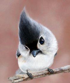 """A fat bird"", via"