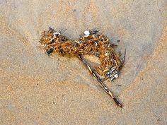 'Strandgut-Stilleben 4/8' von Dirk h. Wendt bei artflakes.com als Poster oder Kunstdruck $19.41