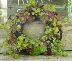 Creative+and+Frugal+DIY+Garden+Art+Projects:+You+won't+believe+what+hold+this+succulent+wreath+together!
