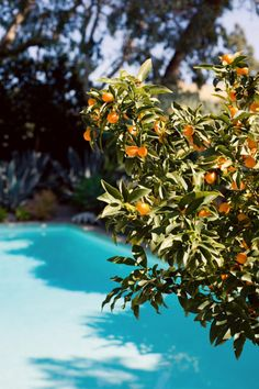 I love Citrus trees.