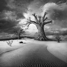 Rezerwat by Dariusz Klimczak on 500px